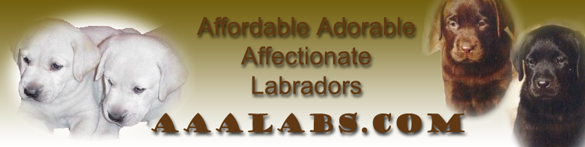 Labrador_AKC_Puppies for sale Southern California - Labrador Breeder,